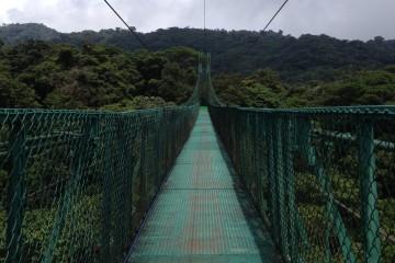 bosque nubioso 10