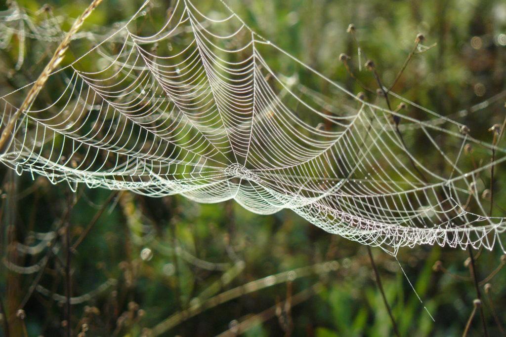 slack-spiderweb-morgan-jones-near-west-plains-mo_47