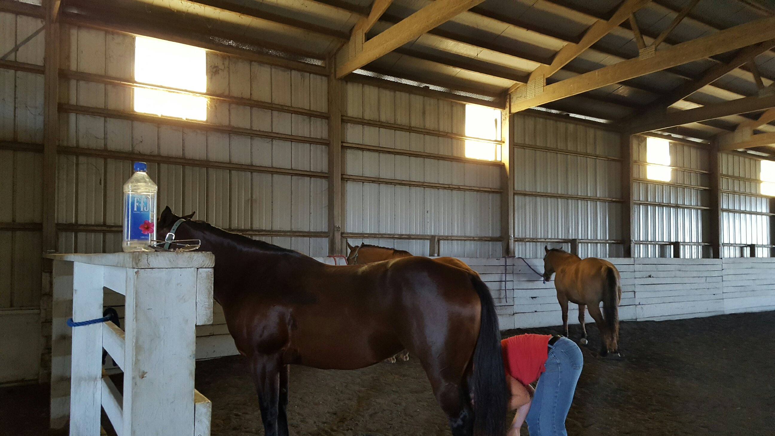 Horse equine physical therapy - Horses Take A Break At The University Farm After A Riding Session Some Of The