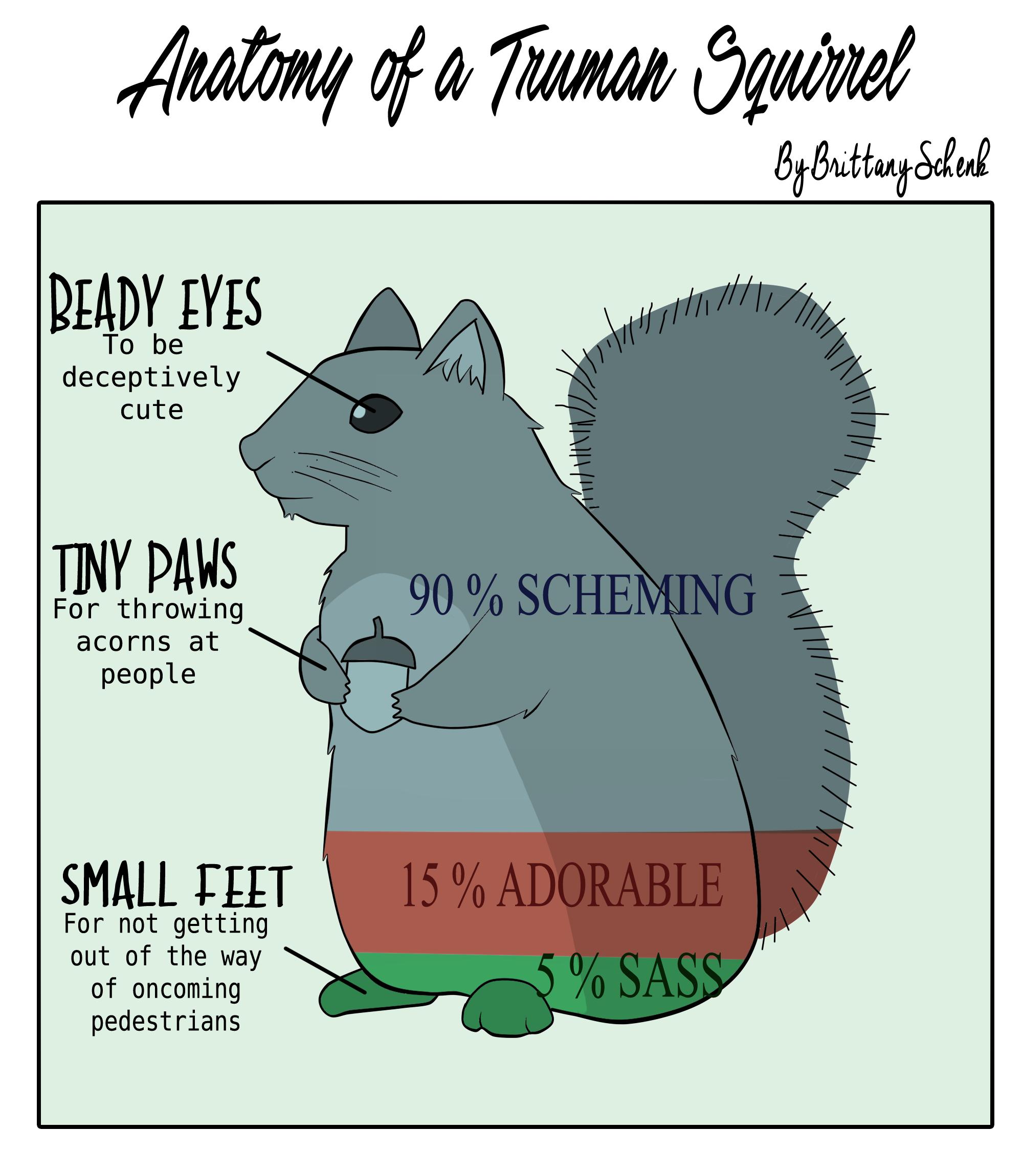 Web Comic  Anatomy Of A Truman Squirrel  U2013 Truman Media Network